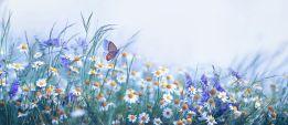 Chamomile flutter