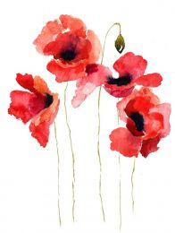 Poppies stripped bare