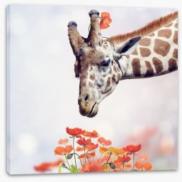 Animals Stretched Canvas 102330882