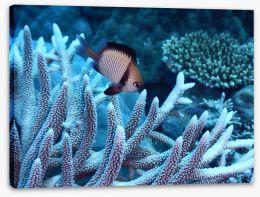 Fish / Aquatic