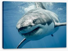 Great white smile Stretched Canvas 103878797