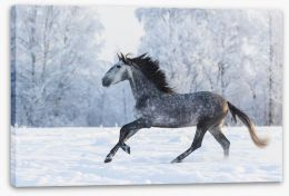 Galloping through the snow Stretched Canvas 103985525