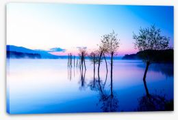 Trees in the water Stretched Canvas 113714528