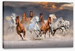 Sunset gallop Stretched Canvas 118236051