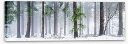 Forests Stretched Canvas 126693872