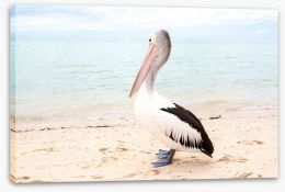 Monkey Mia pelican Stretched Canvas 128266731