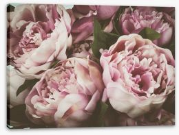 Flowers Stretched Canvas 135780907