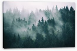 Forests Stretched Canvas 167720092