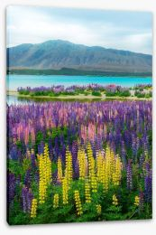 New Zealand Stretched Canvas 169066929