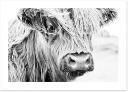 Highland cow monochrome