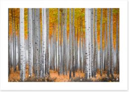 Forests Art Print 195099679