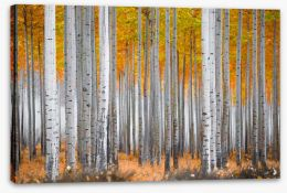 Forests Stretched Canvas 195099679