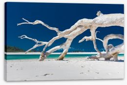 Beaches Stretched Canvas 203519903
