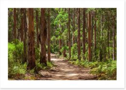 Forests Art Print 213455917