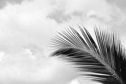 Palm leaf sky