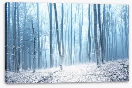 Forests Stretched Canvas 224601038