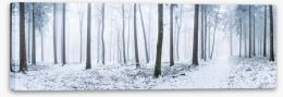Forests Stretched Canvas 235909243