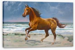 Chestnut horse on the shore