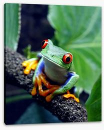 Red-eyed tree frog Stretched Canvas 34031112