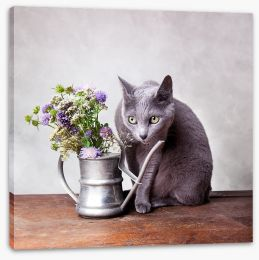 The pensive cat