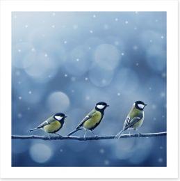 Titmouse birds in the snow