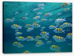 Fish / Aquatic Stretched Canvas 39646634