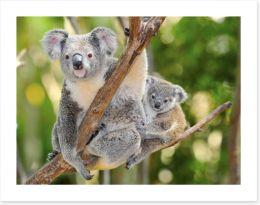 Outback Art Print 40642826
