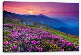 Mountain meadow sunrise Stretched Canvas 40792259