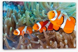 Clownfish in the coral Stretched Canvas 41452622