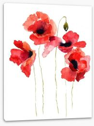Poppies stripped bare Stretched Canvas 41511336