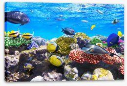 Fish / Aquatic Stretched Canvas 45456584