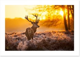 Red deer in the morning sun Art Print 47340232