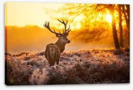 Red deer in the morning sun Stretched Canvas 47340232