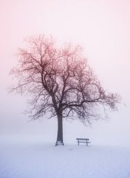 Winter tree in foggy sunrise