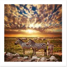 Zebras in Serengeti sunset