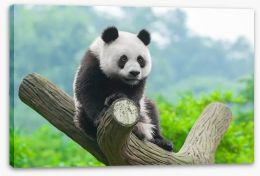 Giant panda Stretched Canvas 51036433