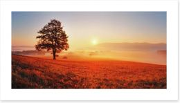 Lone tree in the sunrise meadow Art Print 52071979