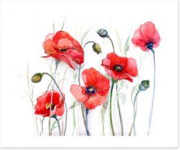 Delicate poppies