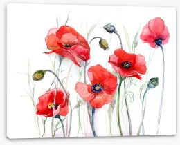 Delicate poppies Stretched Canvas 52270810