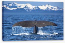 Fish / Aquatic Stretched Canvas 52617063