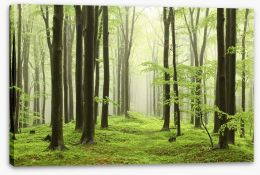Forests Stretched Canvas 52893214