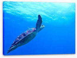 Fish / Aquatic Stretched Canvas 53960280