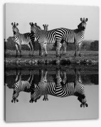 Zebra reflections