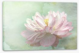 Floating lotus Stretched Canvas 54351451