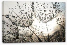 Dandelion dew drops Stretched Canvas 54512856