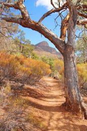 Path to the Flinders Ranges