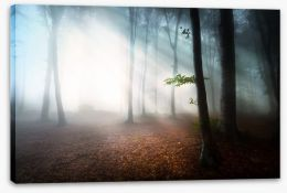 Fog in the forest Stretched Canvas 55675112