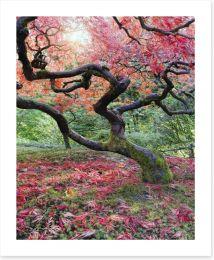 Japanese maple in fall Art Print 57000715