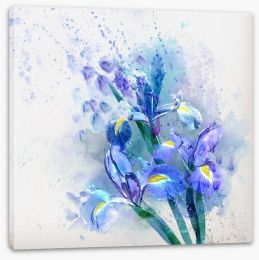 Watercolor iris Stretched Canvas 57523611