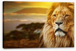 Mount Kilimanjaro lion Stretched Canvas 57644661